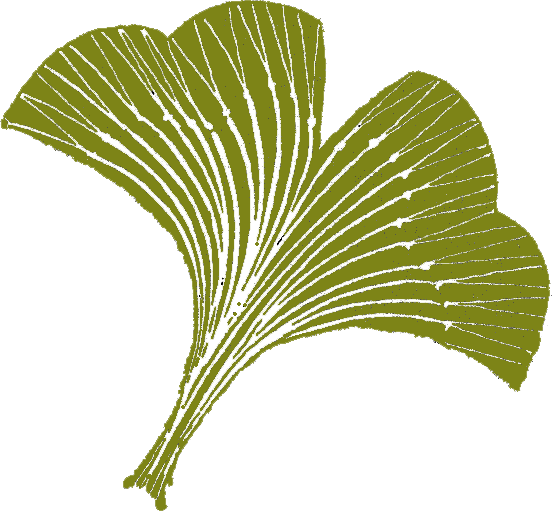 Gingko grün frei[27618]
